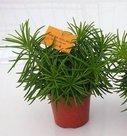 homemeetsnature - Kamerplanten kopen